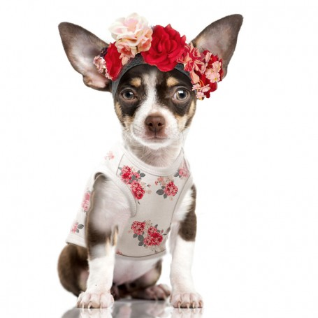 """T-Shirt for dog """"Rosalie"""" by Milk and Pepper (France)"""
