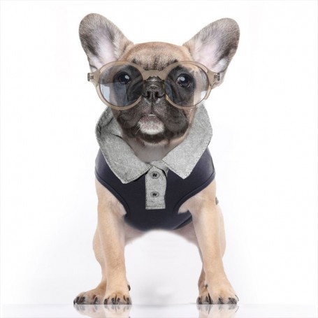 "T-Shirt for dog ""Kennedy Navy"" by Milk and Pepper (France)"
