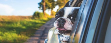 Check out the range of sacsde transport for dog quality